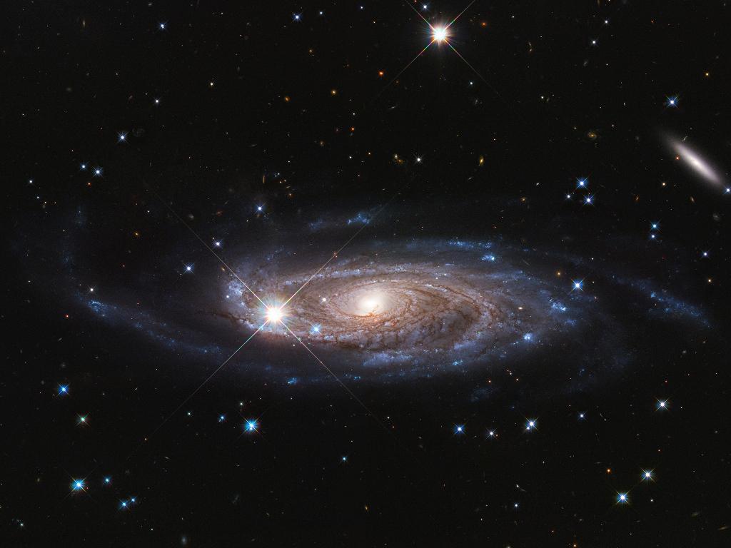 рынка грибов картинка галактика и враги звезд девушек